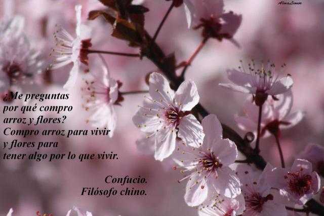 IMG_Confucio