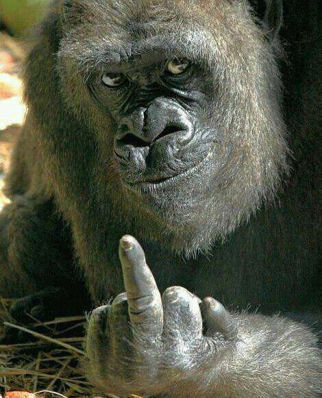 gorila-haciendo-corte-de-manga