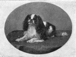 King Charles Spaniel  Prp; William Ernest Carter
