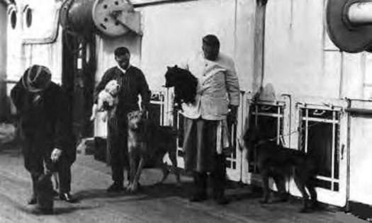 perros-sobreviven-titanic